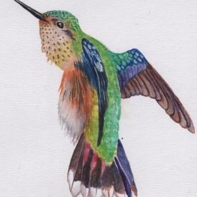 Calliope Rainbow